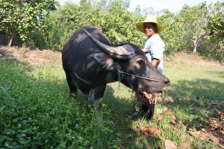 Pimpa Mung-Ngam