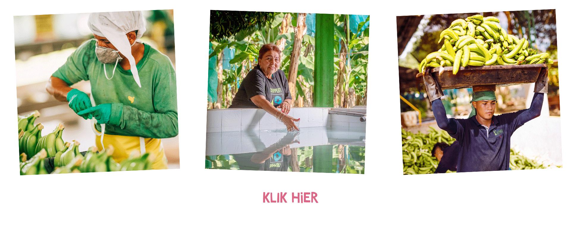 Drie foto's van mensen op bananenplantages