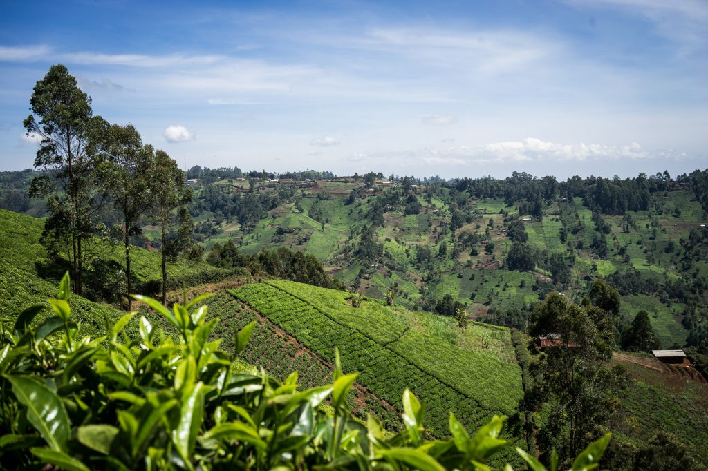 Tea in Kenya scenery